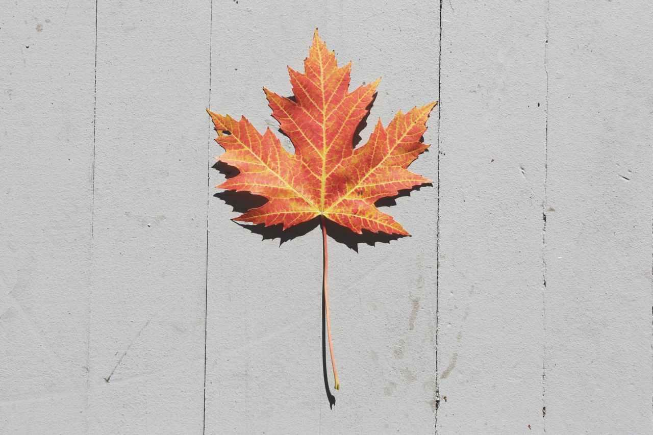 Om høsten